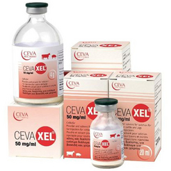 CEVAXEL 50 mg/ml, milteliai ir tirpiklis injekciniam tirpalui