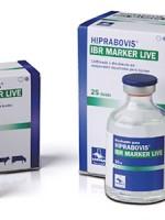 HIPRABOVIS IBR MARKER LIVE liofilizatas ir skiediklis injekcinei suspensijai ruošti galvijams